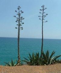 Galeriebild Spanische Meisterschaft 2014 - 9. Tag - Strand und Besichtigung Altafulla