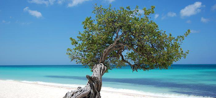 TKD Özer erfüllt ukrainischer Sportlerin den Traum von der Teilnahme an der Behinderten-WM - Strand mit Baum in Aruba